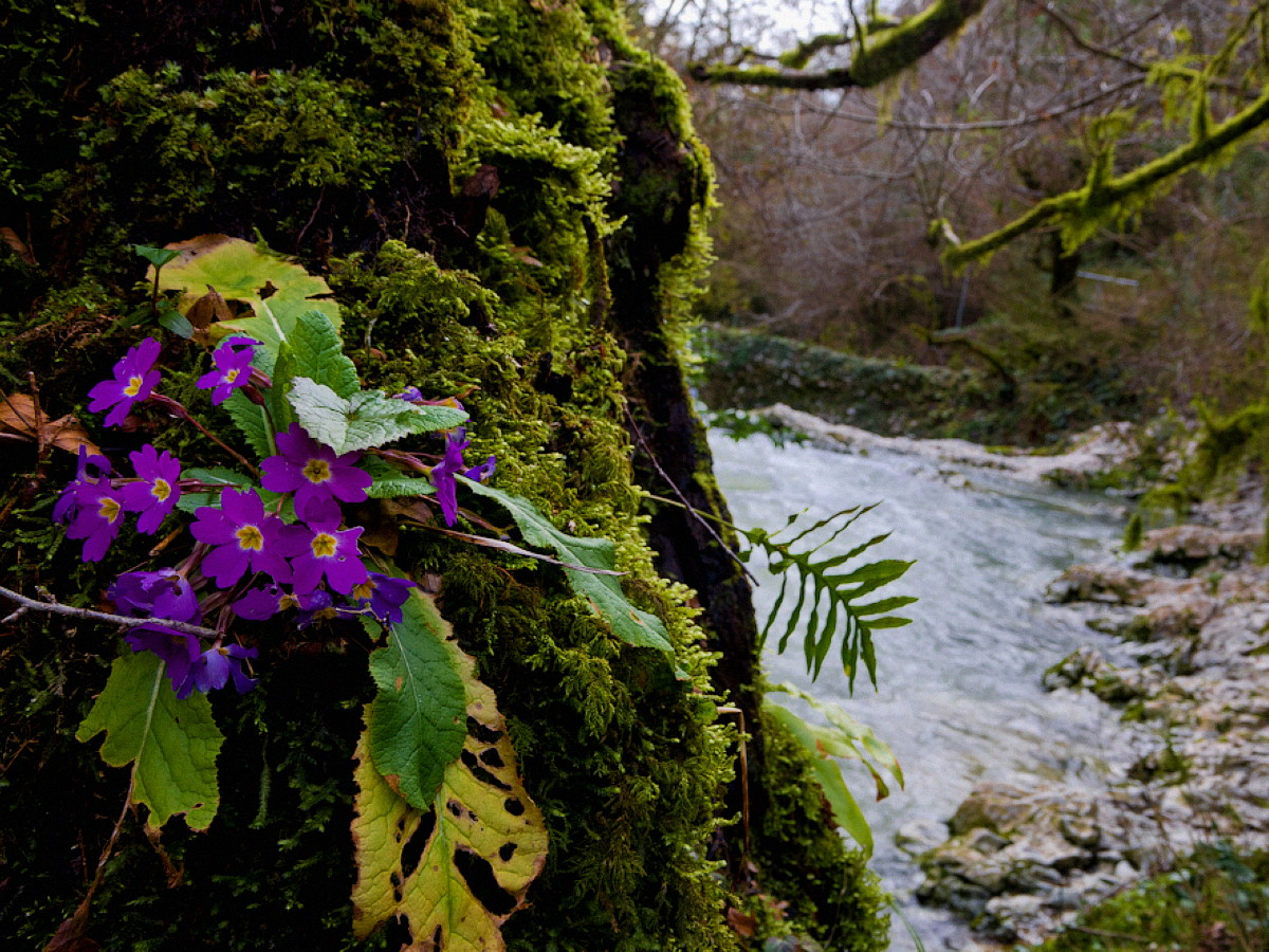Абхазия весной